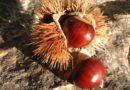 Cia Agricoltori Melfi chiede tavolo operativo in vista della stagione delle castagne