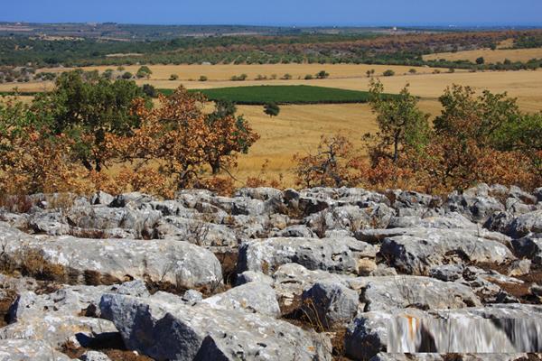 Audizione a Bari in V Commissione regionale sul Parco Nazionale dell'Alta Murgia