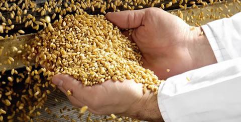 Approvato in Conferenza Stato-Regioni decreto risorse per comparto cerealicolo