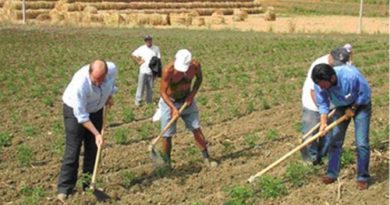 Microvinificazione all'agrario, giovani e scuola scommessa per agricoltura
