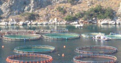 FEAMP: acquacoltura, approvati 3 progetti per 513 mila euro