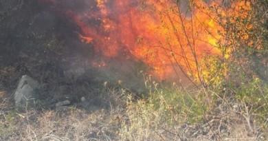 Bosco di Gravina, definito il piano d'azione dopo l'incendio boschivo dello scorso mese