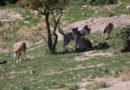 Branchi di lupi popolano il Parco regionale 'Terre delle Gravine'