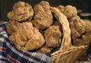 Chiaromonte, il sindaco firma ordinanza che vieta la raccolta di funghi, castagne e tartufi nel territorio comunale