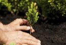 """L'Alsia aderisce alla """"Giornata internazionale del fascino delle piante"""""""