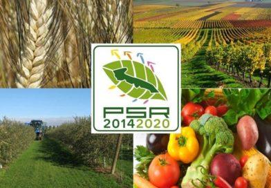 PSR Puglia 2014-2020: pubblicato il secondo avviso pubblico dedicato agli investimenti materiali e immateriali della imprese agricole