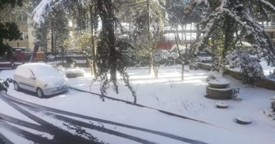 Prime nevicate in Puglia, campagne imbiancate nell'Alta Murgia