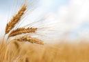 Cerealicoltori ancora in sit-in a Foggia