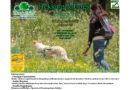 """Sabato 4 luglio, a Cassano delle Murge """"Trekking & Dogs"""""""