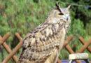 Liberati 60 animali nella Riserva di Torre Guaceto