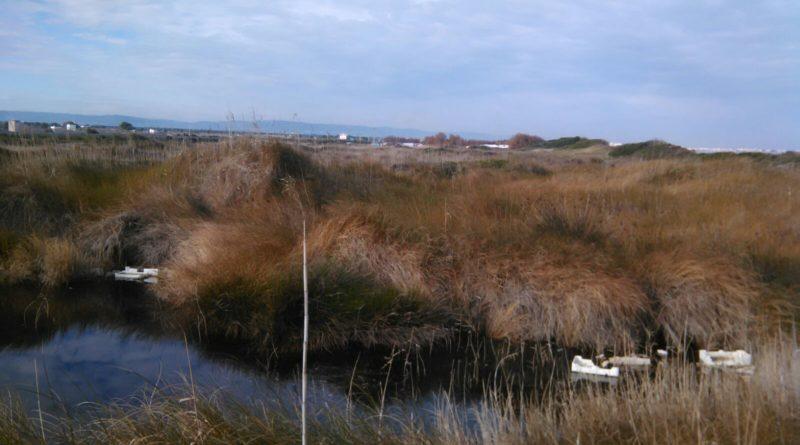 La giunta comunale di Fasano dà il via ai lavori di pulizia del territorio nel parco 'Dune Costiere da Torre Canne a Torre san Leonardo'