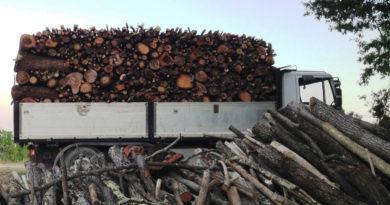Bella, quattro arresti per furto di legna nei boschi